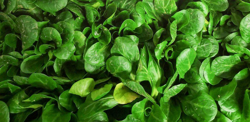 SaladeWeb